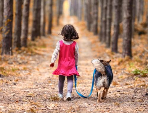 Een boswandeling met de hond