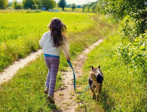 Steungezin gezocht na schooltijd voor een zorgzaam meisje van 11 jaar