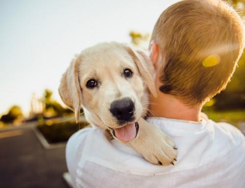 Gezellig gezin gezocht voor dierenvriend van 11 jaar