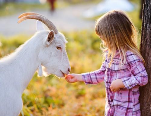 Wil jij een lief meisje van 3 jaar helpen?
